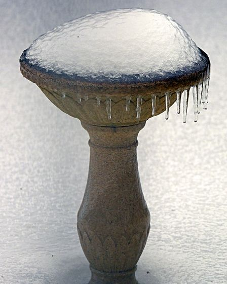 Every day for the last few days I have had to defrost my bird bath so that the birds can drink. Pict