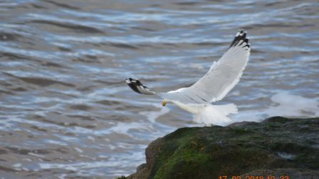 You either love them or hate them. Just spend time watching them at Orcombe Point and you will lear