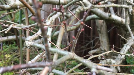 Whilst walking the dog, I was inspired by these bare branches for my interpretation of 'abstract'. P