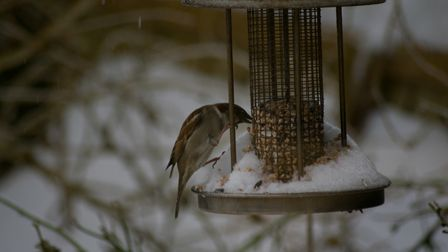 few photos from the snow. Picture: Jason Sedgemore