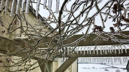 Icicles and frozen rain on our pergola in Colyton. Picture: Lycia Moore