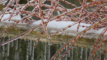 Freezing rain halts Spring in its tracks. Picture: Laura Thompson