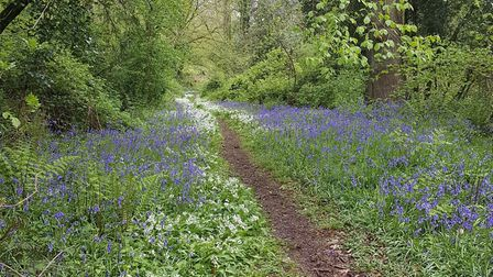 Holyford Woods walk. Picture: Contributed