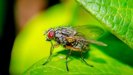 Taken in an exmouth garden last summer. Even Flys look good close up. Picture: Richard White