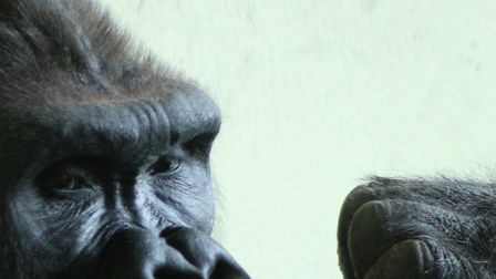 One day at Paignton Zoo. Picture: Paco Castejon
