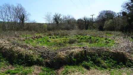 """I was volunteering with the """"East Devon Countryside Team"""" at the Honiton Bottom Road Nature Reserve,"""