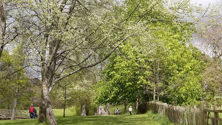 The Byes in the spring. Picture: Diana East
