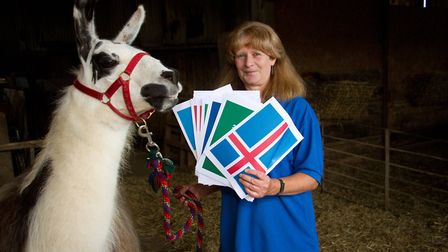 Ollie the Llama that predicted England to win the world cup. Ref shs 24 18TI 5567. Picture: Terry If
