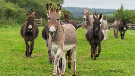 The Hee-Hawsome Summer Festival at The Donkey Sanctuary will take place this weekend.