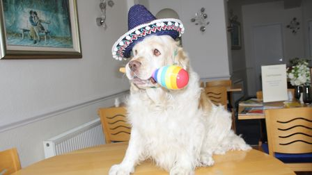 Lucky Buster celebrates Mexico's World Cup victory