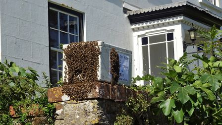 Colony of bees rescued from the roof space of The Donkey Sanctuary's main office