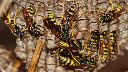 There was an 'unprecedented' number of wasps' nests in East Devon this summer