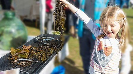 Learning all about seaweed at Sidmouth Science Festival. Picture: Tony Velterop