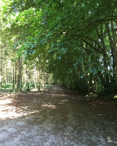 A walk on Woodbury Common. Picture: Sue Babb