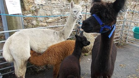 Animals at Sidbury Fair Week. Picture: Contributed