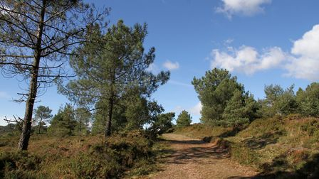 Woodbury Common. Ref exe 41-16TI 9720. Picture: Terry Ife