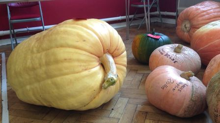 Large pumpkins. Picture: Contributed