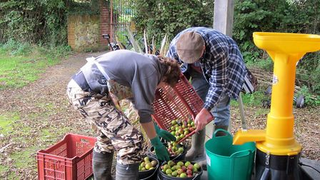 Apple pressing at Thorn Park. Picture: Contributed