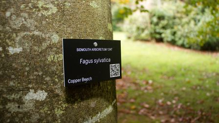 A QR label on one of the trees in the Knowle Gardens. Ref shs 43 18TI 3836. Picture: Terry Ife