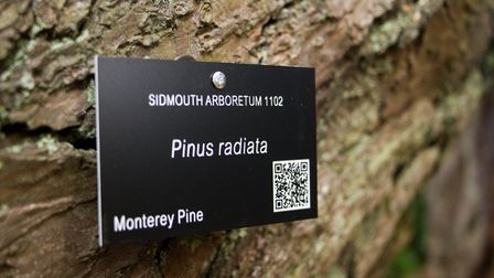 A QR label on one of the trees in the Knowle Gardens. Ref shs 43 18TI 3829. Picture: Terry Ife