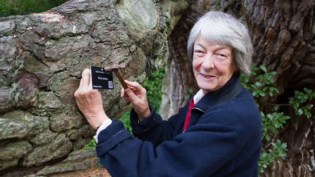 Diana East putting a QR label on one of the trees in the Knowle Gardens. Ref shs 43 18TI 3824. Pictu