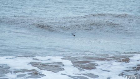The seal was spotted enjoying itself in the waves. Picture: Kyle Baker (www.kylebakerphotography.com