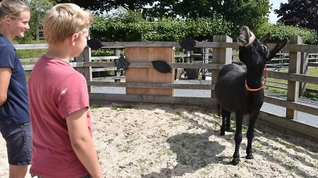 Suicide-bereaved families visited The Donkey Sanctuary thanks to Pete's Dragons. Picture: The Donkey