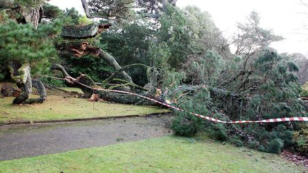 The fallen branches are currently blocking the Sidmouth Arboretum Tree Trail. Picture: Sidmouth Arbo