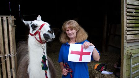 Ollie the Llama that predicted England to win the world cup. Ref shs 24 18TI 5576. Picture: Terry If