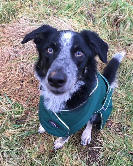 Benji. Border Collie. Age one. Picture: Arc - Ottery Animal Rescue Centre
