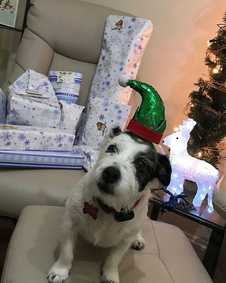 Daisy is a 5 year old Jack Russell Terrier in her festive hat. Picture: Josefina Gori