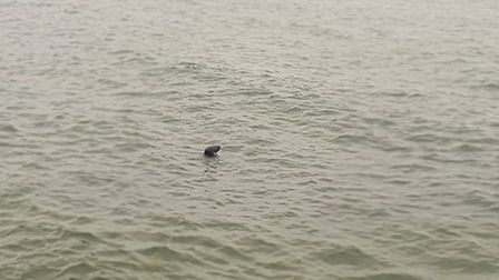 The seal was pictured near Jacob's Ladder. Picture: Agnieszka Orlowska