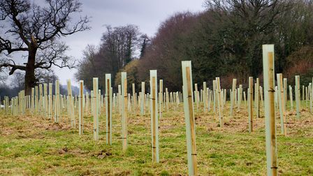 Nine thousand trees being planted in an Ottery field down by the River Otter. Ref shs 07 19TI 0120.