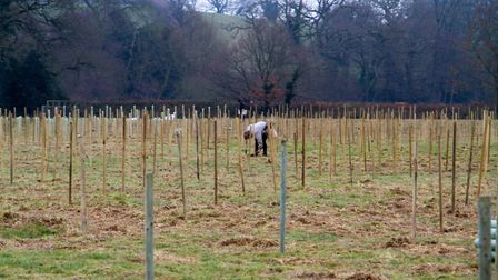 Nine thousand trees being planted in an Ottery field down by the River Otter. Ref shs 07 19TI 0091.