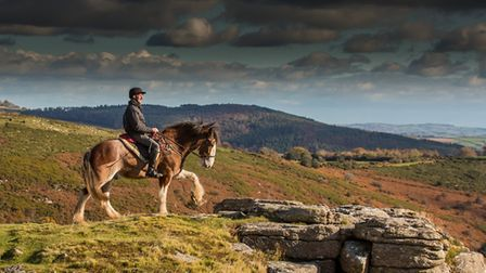 A Clydesdale in the beautiful surroundings of Darmoor. Picture MALCOLM SNELGROVE