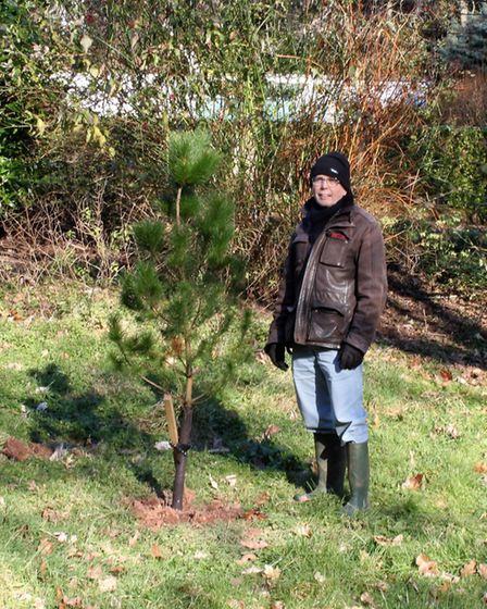 Ed Dolphin with Monterey Pine 1282, a direct seedling from 1102. Picture; Ed Dolphin