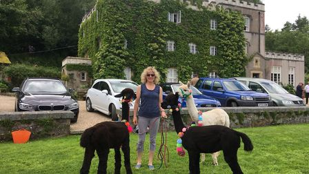 Pippa Westall of Bearhouse Alpacas with Brian, Valentino and Merry, who have been asked to poo on th
