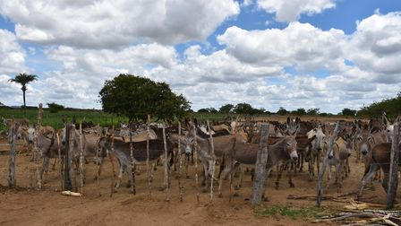 Scenes from the farm where The Donkey Sanctuary staff have been at work to save hundreds of the anim