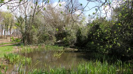 The Knapp Nature Reserve. Ref shs 16-17TI 9916. Picture: Terry Ife