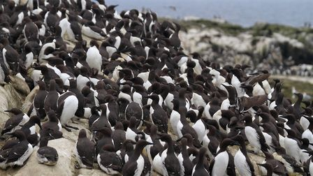 A gaggle of gullimots. Picture: Mark Taylor Hutchinson