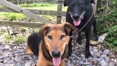 Ruby and Murphy need some good walkies - can you help? Picture: The Cinnamon Trust.