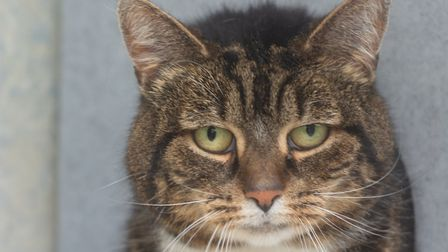 Tabitha. Picture: Axhayes Adoption Centre