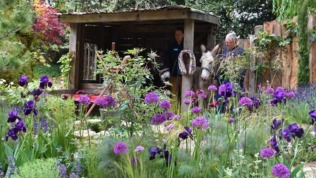 The garden won a silver award at the show. Picture: The Donkey Sanctuary