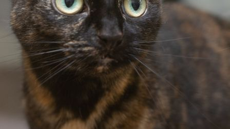 Lila needs her independence. Picture: Axhayes Cat Adoption Centre