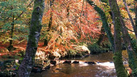 When the Autumn leaves were at their finest. Picture: Barbara Mellor