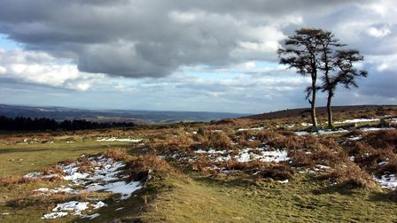 Taken whilst on a walk close to Haytor. Picture: Barbara Mellor