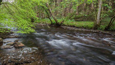 Low water on the river downstream from Fingle Bridge. Picture: Brian Westaway