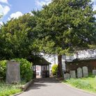 A Yew Tree in Sidmouth Parish Churchyard. Ref shs 20 19TI 4721. Picture: Terry Ife