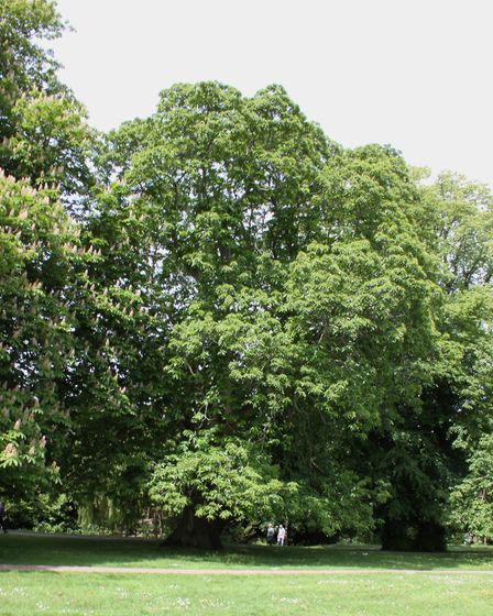 Chestnut 1001 in The Byes