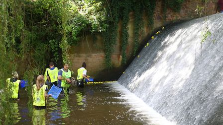 Sidmouth Duck Derby, 2019. Picture: Simon Horn